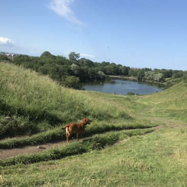 Day 93 – Reflections on Lock-Down